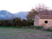 Campagna con aranci e casa abbandonata, sullo sfondo i monti Iblei